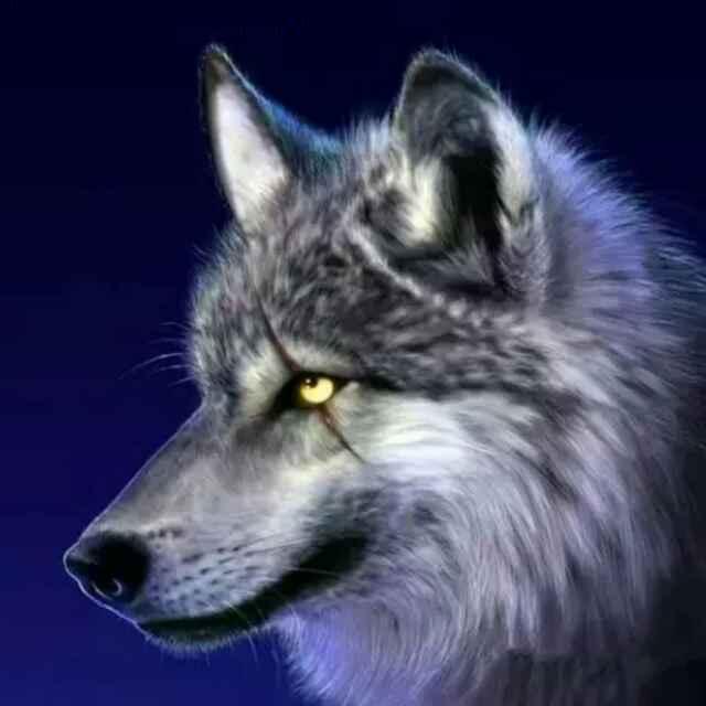 西伯利亚狼