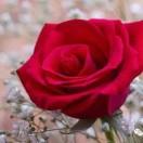 1001_1751805370_avatar