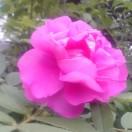 3002_1522155583_avatar
