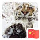 8001_1586361_avatar