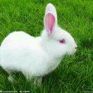 1001_15423817409_avatar