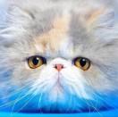 8001_2913187_avatar