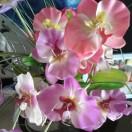 1001_1416513126_avatar