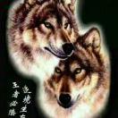 北方苍狼(圆通速递)