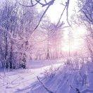 冬日里的阳光