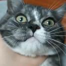 噜噜是只猫