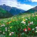 风和日丽春暖花开