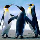 企鹅🐧Tusm