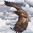 飞在云端之上