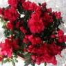 5001_113353441_avatar