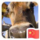 陈家庄肉牛养殖场