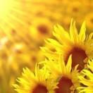 暖心向阳🍀