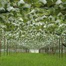 Geg鼎龙国际葡萄酒保税区OEM