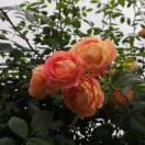 3002_17864939_avatar