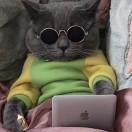 我喜欢肥嘟嘟的猫
